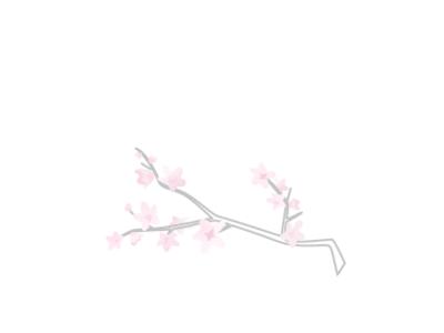 Cherry Blossom Branch pink petal flower cherryblossom cherry branch cherry blossom