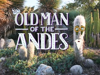 Old Man of the Andes