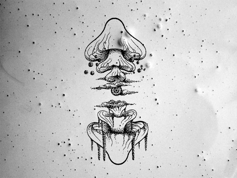 Mushroom Tattoo By Jin Dribbble Dribbble