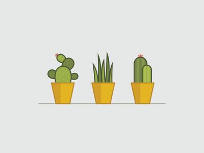 Plants 'n pots