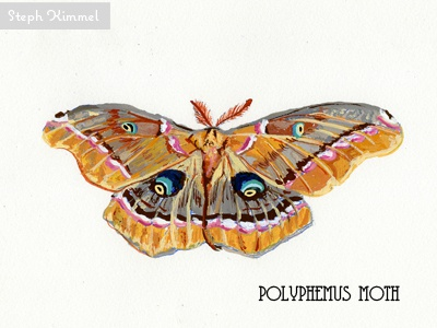 Polyphemous Moth painting design gouache science insects illustration