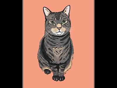 Mowgli kitty cat illustration cat drawing cat portrait procreate illustration graphic design