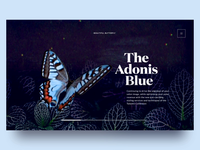 Butterfly Species Landing Page