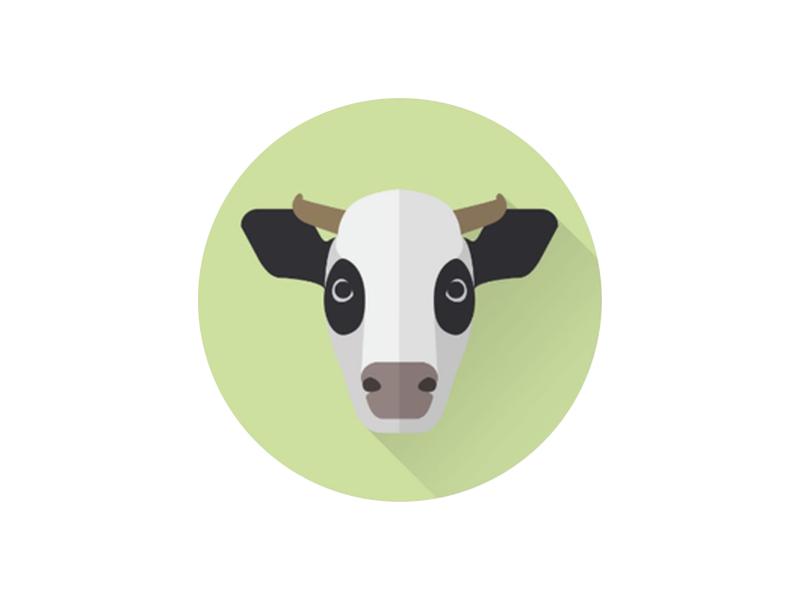 Cowabunga! vector portrait cow minimal illustrator illustrations icon flat drawing