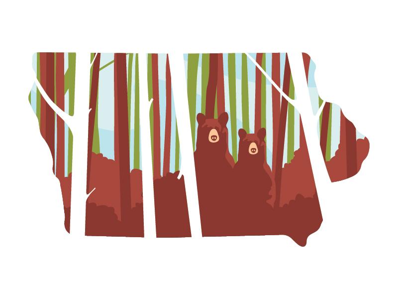 Wedding Bears forest iowa illustration bears