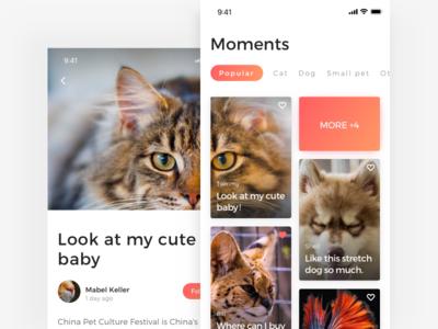 Moments page of Adoption App pet app dog cat adoption