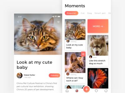 home page of Adoption app pet dog cat adoption