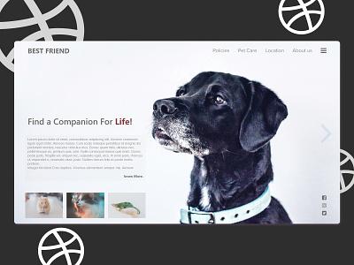 Best Friend pet care pet webdesing uiux design uiux ui ux web illustration inspiration design