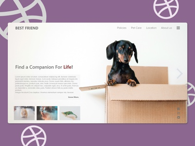 Best Friend pet care pet ui ux web webdesing uiux uiux design illustration inspiration design