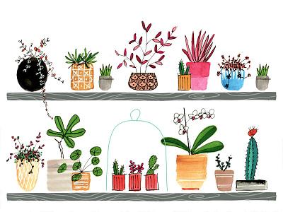 Pot Plants line illustration collection plants gardening editorial handdrawn digitalart watercolour watercolor illustration