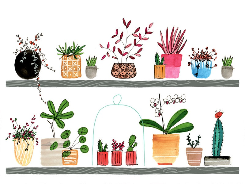 Pot Plants line illustration collection plants gardening editorial handdrawn digitalart watercolour watercolor illustration