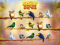 Birds game concept