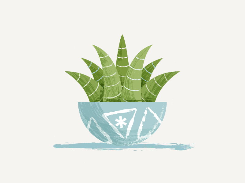 potted plant illustration pot succulent plant