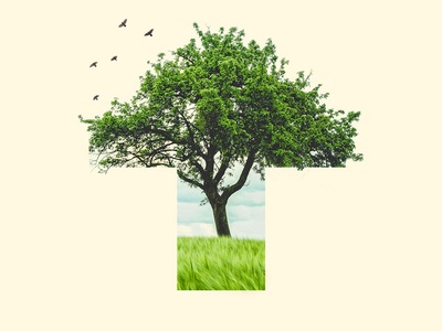 T — 36 Days of Type photoshop photo collage t nature birds collage tree 36 days of type typography type lettering