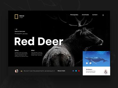 Red Deer - Header animals gold black nature slider header landing page web ux ui