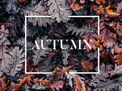 autumn font photo design colors nature leaves autumn