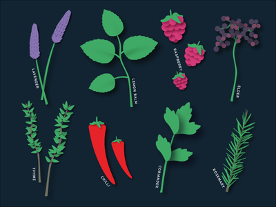 Plant illustrations shadows herbs plants food design illustration