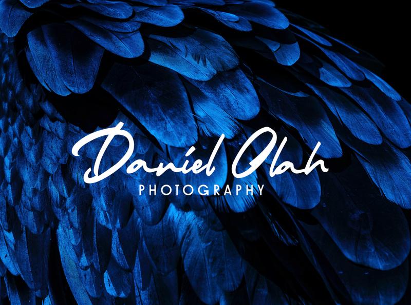 Signature Logo with Winifred & Bignode photography photography branding photography logo clean minimalism logotype display font branding editorial design logo font typography design
