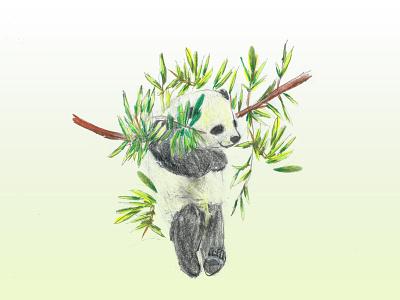 Panda Illustration animal art animal illustration pencil sketch artwork pencil art pencil drawing panda photoshop pencil illustration