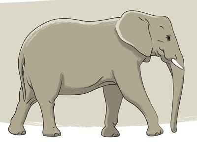 Elephant 400