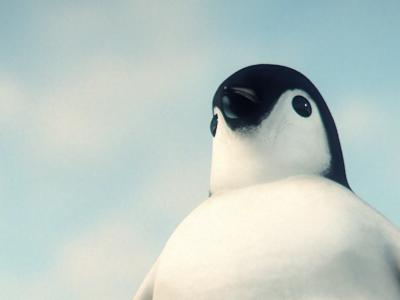 Happy fishmas c4d bodypaint penguin festive cinematic