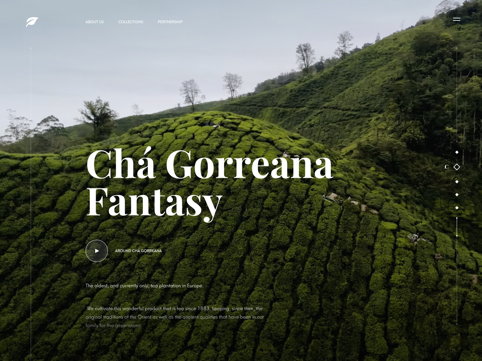 Tea company website concept