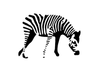 Zebra Black & White Illustration