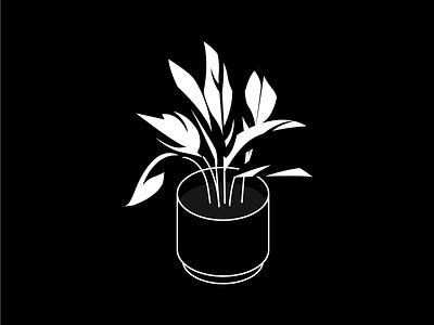 White Fusion Calathea leafy isometric indoor plant calathea plant illustration plant