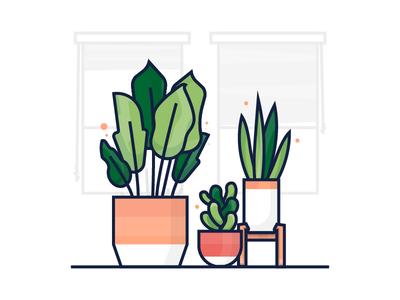 House Plants leaves home decor plants