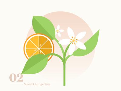 Sweet Orange Tree decor icon illustration green botanicals orange plants