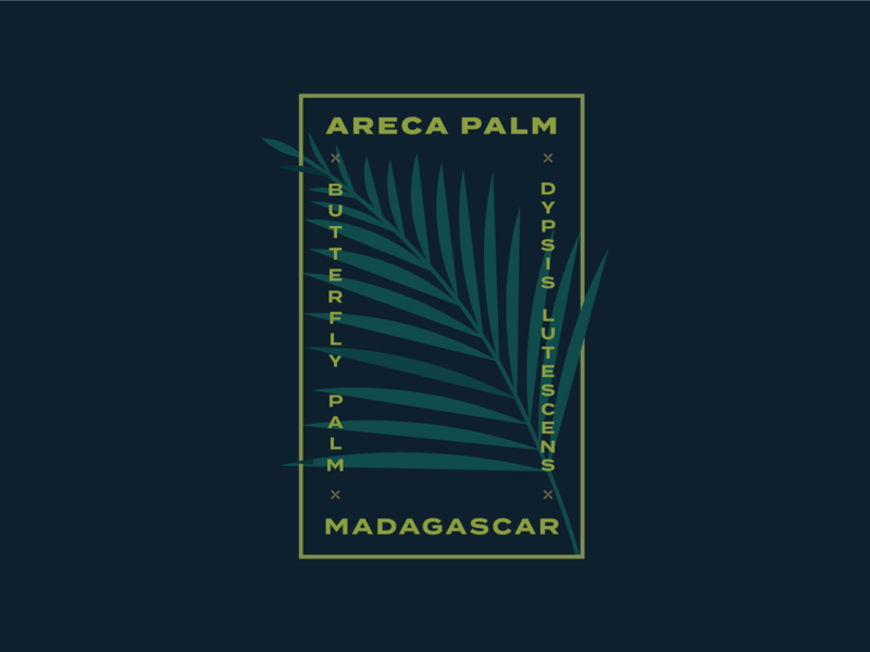 Areca Palm badge design badge logo design palm areca palm kps3100 logo illustration plants plant