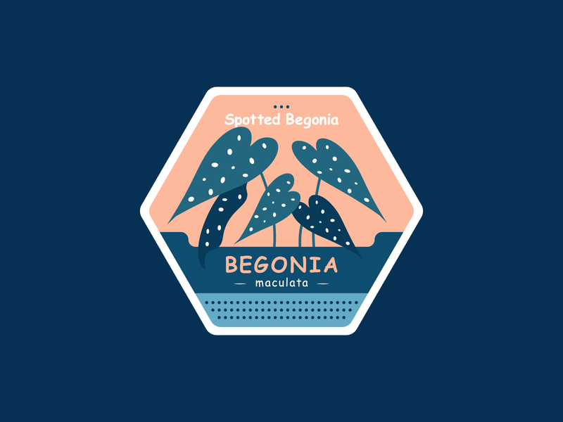 Spotted Begonia comic sans maculata spotted begonia begonia badge design badge plant illustration plant kps3100