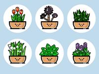 plants(02)