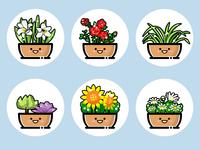 plants(04)