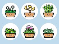 plants(06)