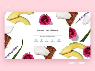 Kopari Beauty - Coconut Powered Beauty ingredients about page lavender rose avocado icons web natural ecommerce cosmetics coconut beauty aboutus
