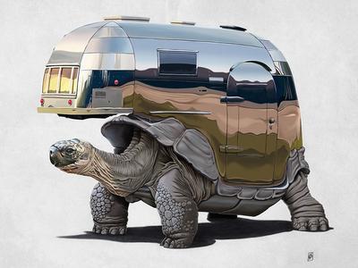 Pimp My Ride tortoise chrome airstream animal vehicle caravan metal mammal