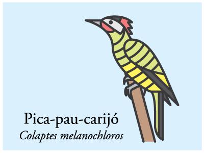 Pica-pau-carijó illustration icon vector bird brazil