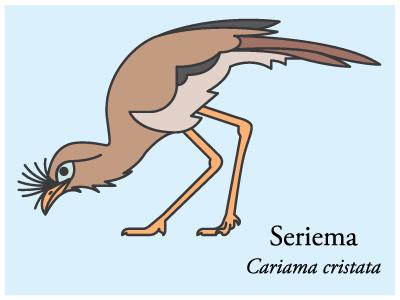 Seriema icon illustration vector brazil bird