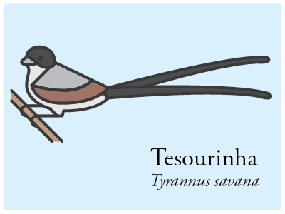 Tesourinha vector illustration icon brazil bird