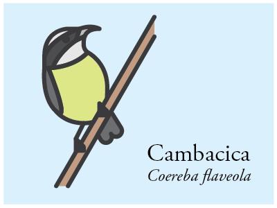 Cambacica vector illustration icon brazil bird