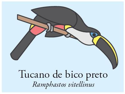 Tucano-de-bico-preto vector illustration icon brazil bird