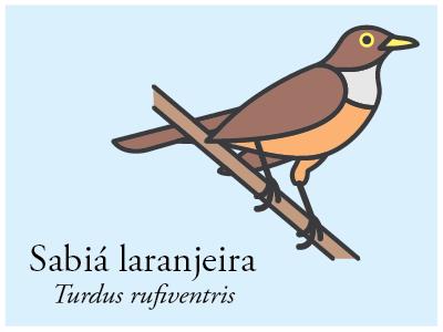 Sabiá-laranjeira vector illustration icon brazil bird