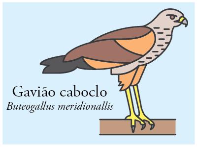 Gavião-caboclo vector illustration icon brazil bird