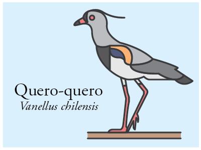 Quero-quero vector illustration bird brazil icon