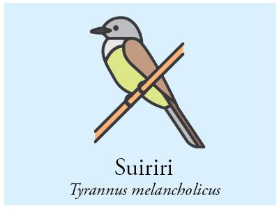 Suiriri vector bird brazil illustration icon