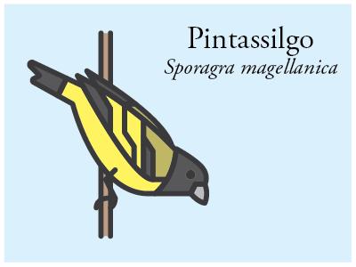 Pintassilgo vector illustration brazil bird icon