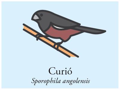 Curió vector illustration brazil bird icon