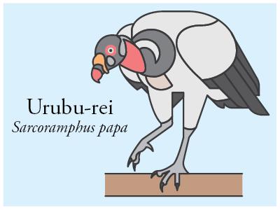 Urubu Rei vector illustration brazil bird icon