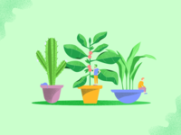 Plant And Flower